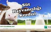 TEB Süt Hayvancılığı Kredisi
